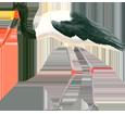 Cigogna africana ##STADE## - piumaggio 34