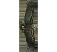 Avvoltoio monaco ##STADE## - piumaggio 51
